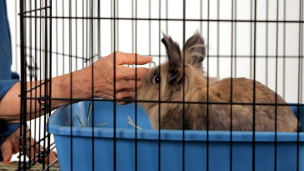 Почему кролики грызет клетку, как отучить