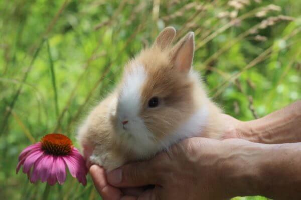 Как приручить кролика