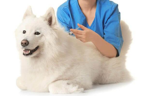 Обязательные прививки для собак