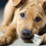 Почему нельзя давать собаке грызть кости?
