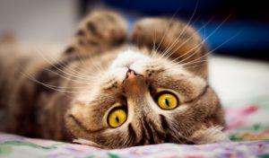 Что делать, если кошка не хочет оставаться дома одна