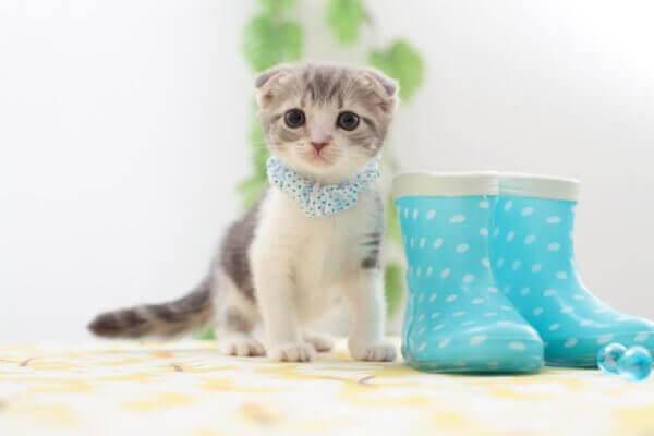 Правильный выбор и приобретение котенка