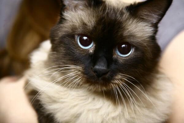 Жидкий стул у кота причины и лечение