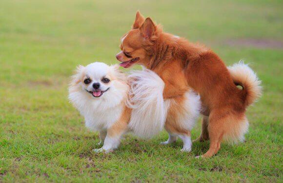 Условия вязки собак