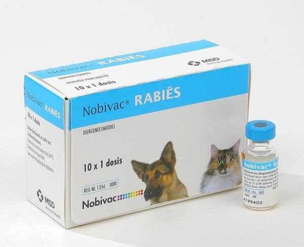 Вакцина нобивак для кошек - прививки для кошек