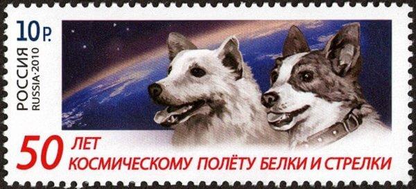 Собаки Белка и Стрелка – собаки космонавты
