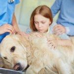 Чем лечить понос у собаки