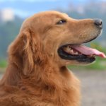 Договор вязки собак
