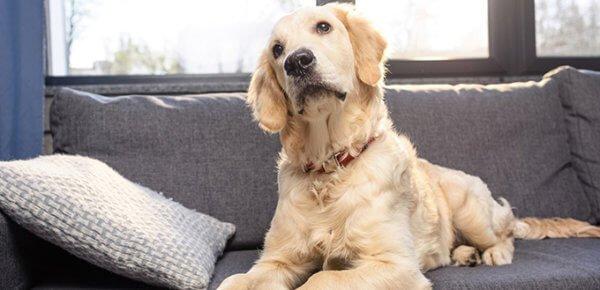 Почему у собаки перхоть и как ее вылечить