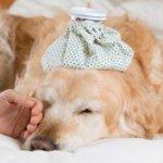 Что делать, если у собаки рвота