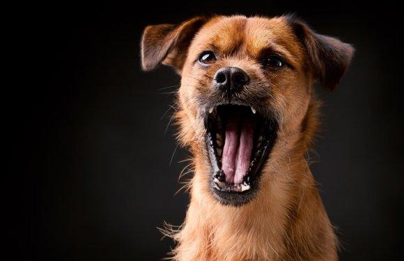 Если собака слишком много лает