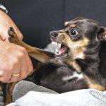 Что делать если собака кусается и как отучить
