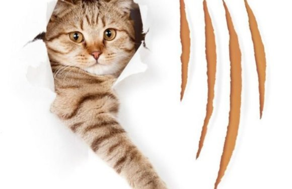 Как кошку отучить драть обои