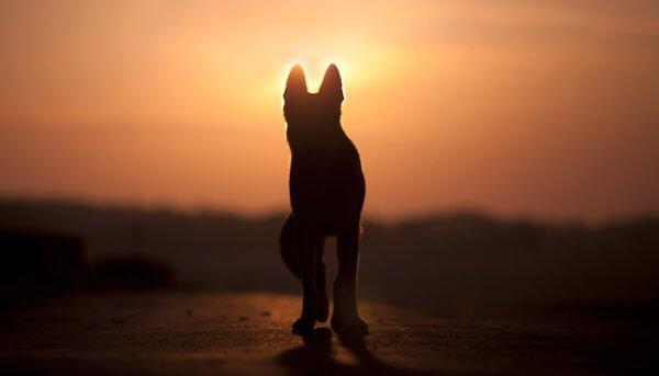 Интересные факты о служебной собаке