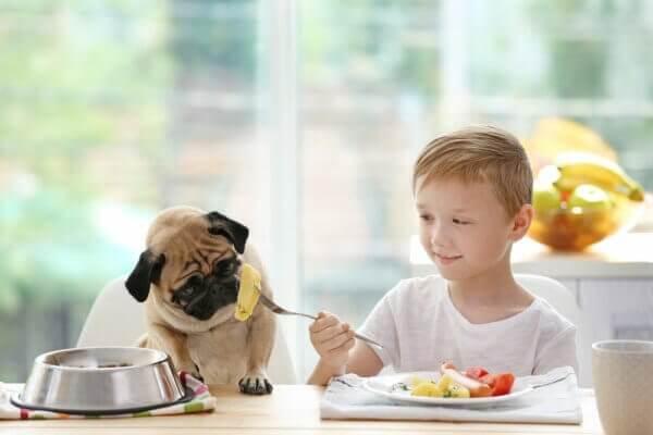 Можно ли собакам давать картошку