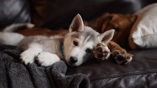 Интересные факты о собаках и космосе