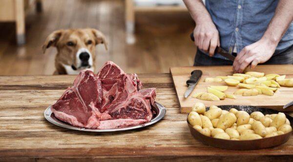 Можно ли собакам сырой картофель