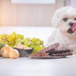 Можно ли собакам виноград