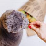 Сколько может кошка прожить без еды и воды