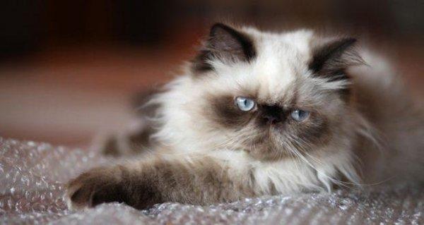 Какая у кошек нормальная температура
