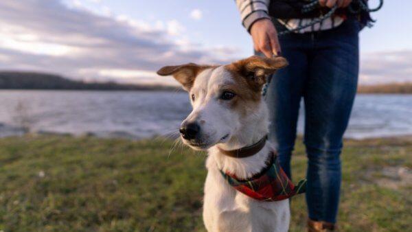 Cколько нужно гулять с собакой в день и по времени