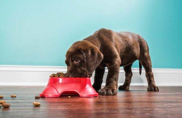 Кормление щенков с 2 до 6 месяцев