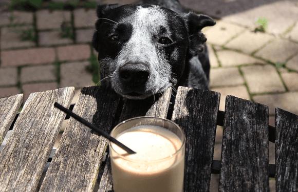 Можно ли собаке давать кефир