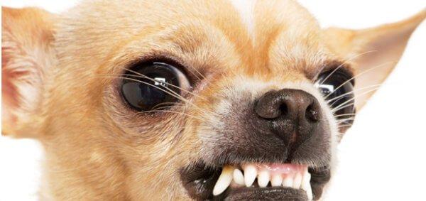 Почему собака рычит на хозяина