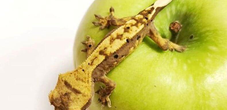Можно ли бананоедам давать яблоки?